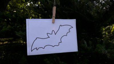 Papírové stínítko
