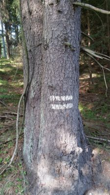 Prostorové rozdělení lesa, hranice oddělení.